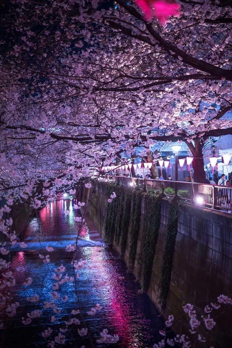 潜在意識、阿頼耶識とネガティブの美しい夜桜を堪能しよう