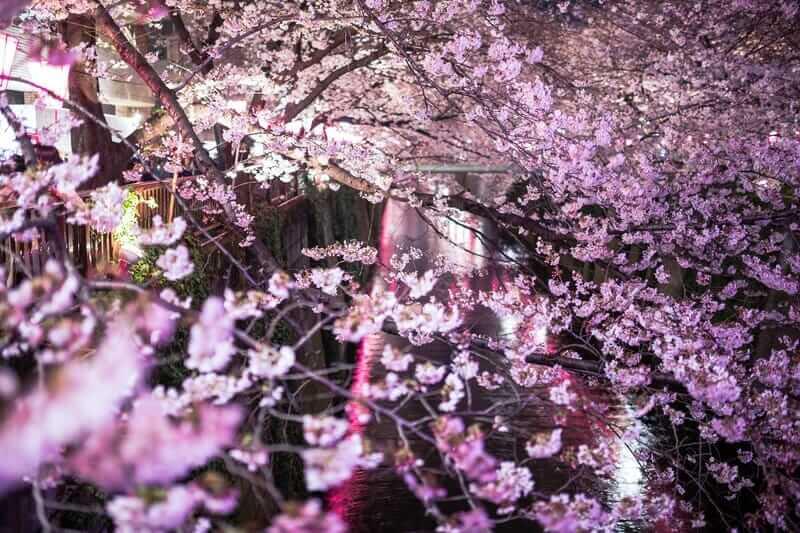 ネガティブは、潜在意識、阿頼耶識の美しい夜桜