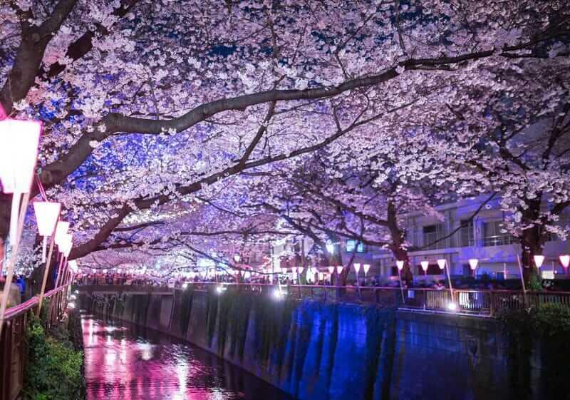 潜在意識、阿頼耶識は、咲き誇る夜桜のようなネガティブを愛します。